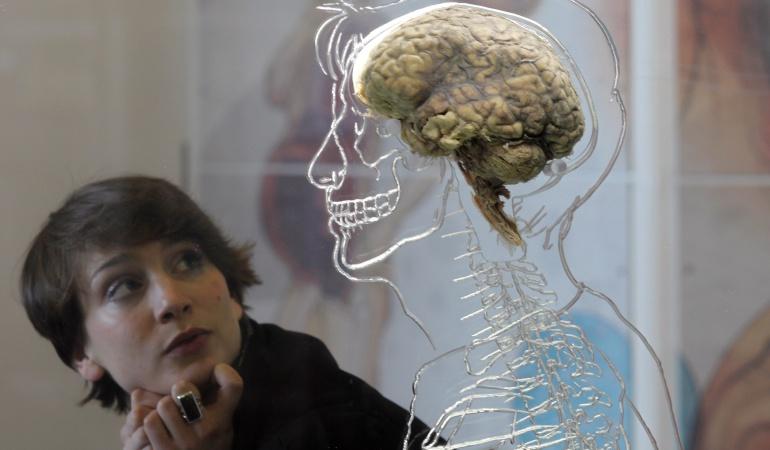 Lo que ocurre en el cerebro mientras aprende nuevos idiomas